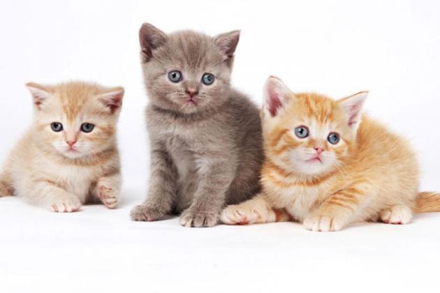 cat-quiz_0